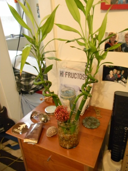 My bamboo bush thing is the only plant I've ever managed to not kill